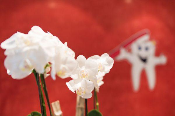 Orchideen Empfang - Praxis Hallmich-Kober in Hilden